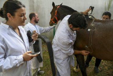 La relación público-privado en el sector de la biotecnología local: el caso de los caballos de polo